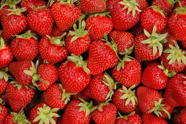 Vertellus.strawberries2.2014